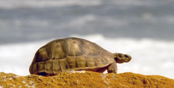 Sea Turtles Suppliers Exactly How To Do It Correct